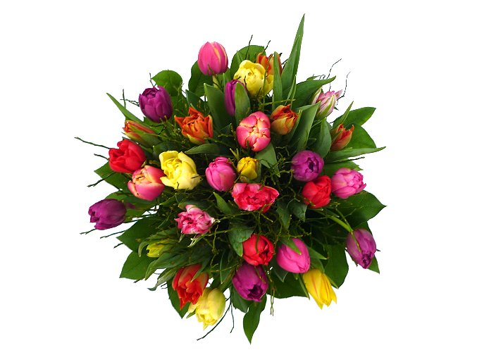 i000190 tulipa novy puget s boru v 588bcbe815e54