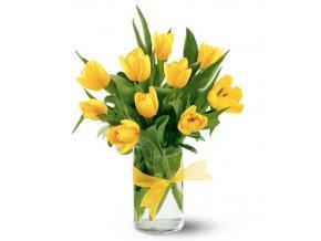 zluté tulipány