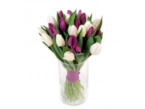tulipany mixxxx
