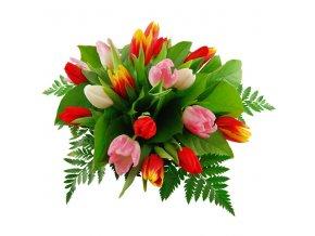 i000188 tulipa novy puget s rumoro 588bcbe7edbd9