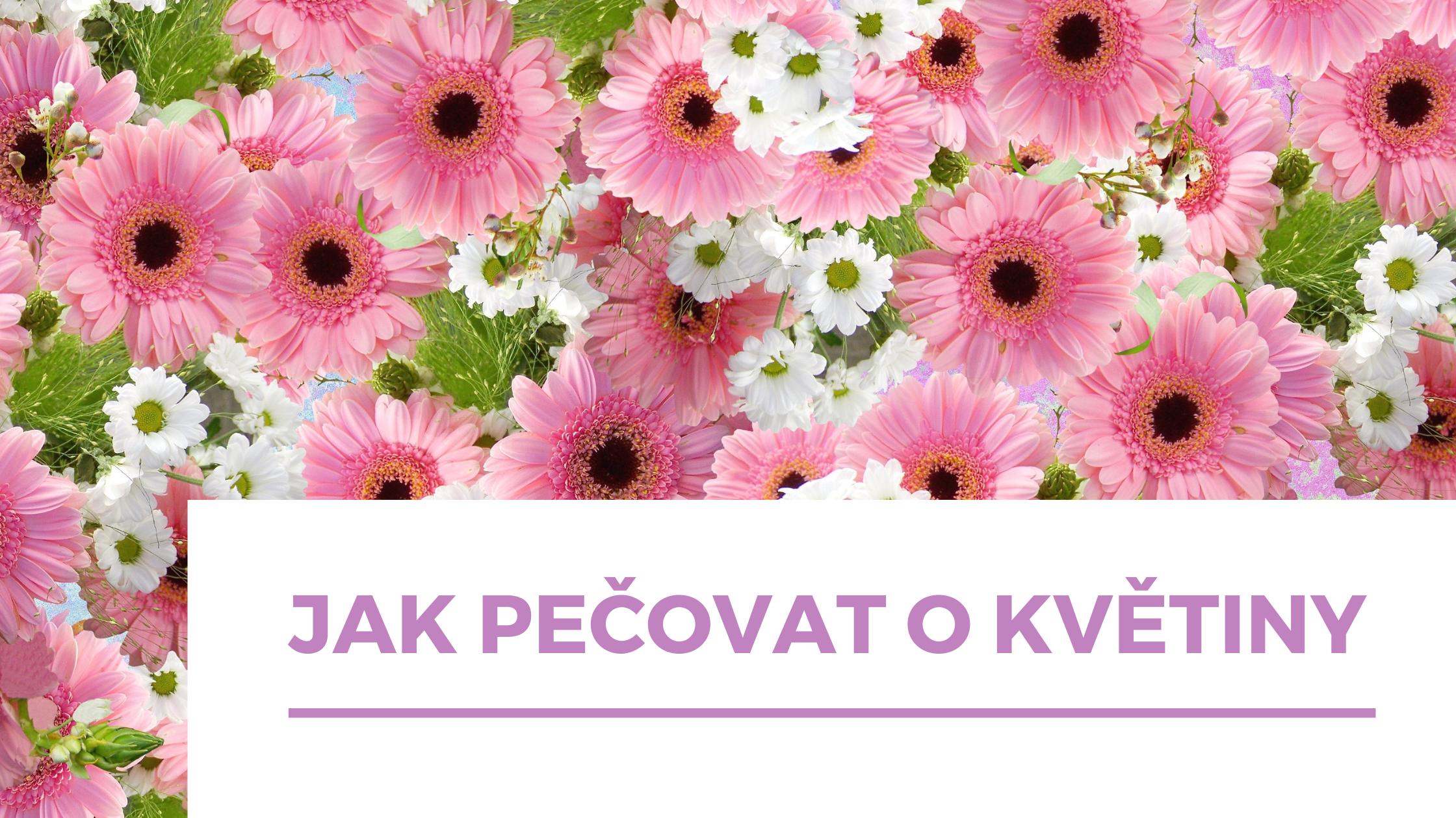 Jak udržet řezané květiny v kondici