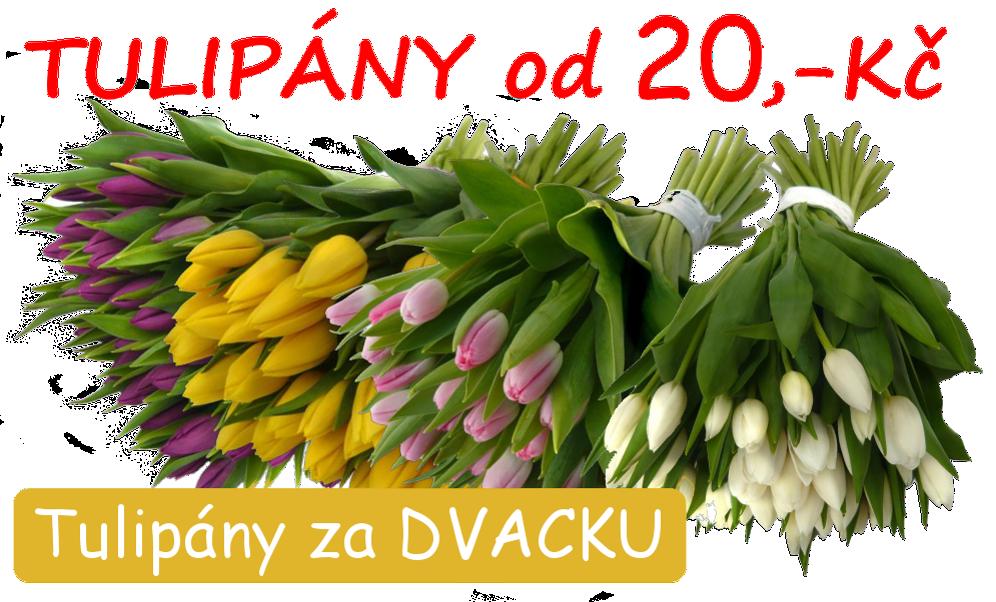 Tulipány za 20,-