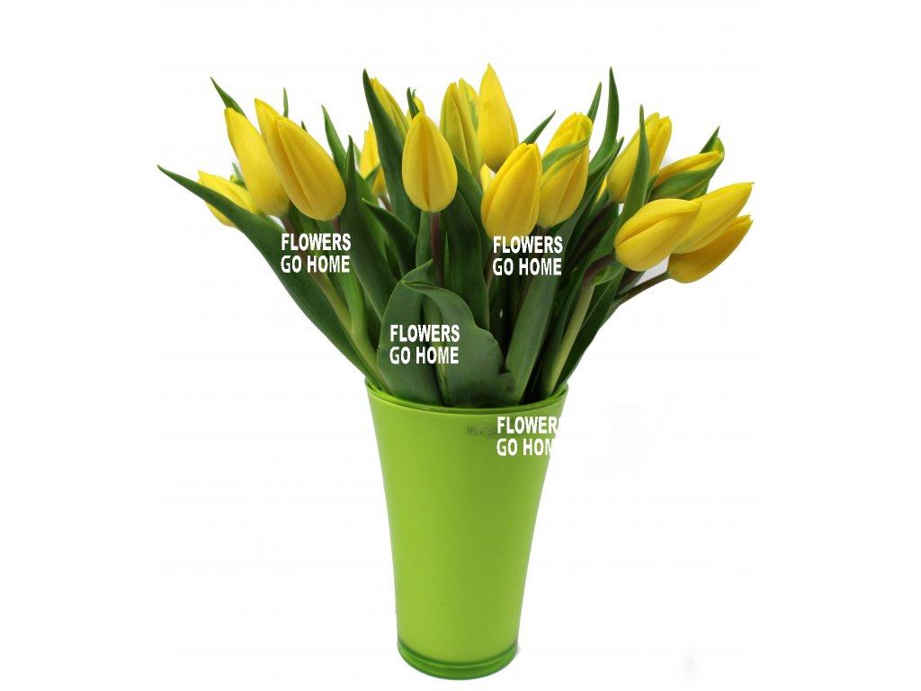 žluté tulipány