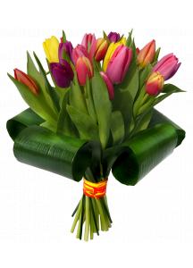 Tulipánové žezlo