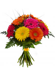 Gerbery barevná kytice