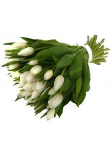 50 bílých tulipánů