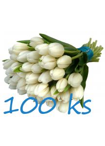 100 bílých tulipánů