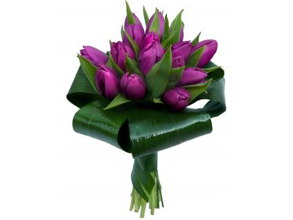 Fialové tulipány - žezlo