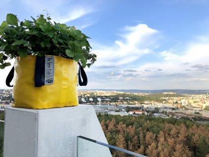 The Green bag S jahody balkon město