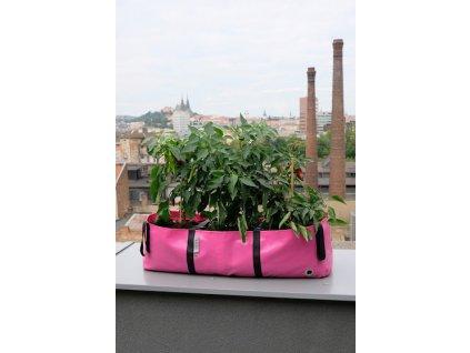 The Green Block L růžová papriky město