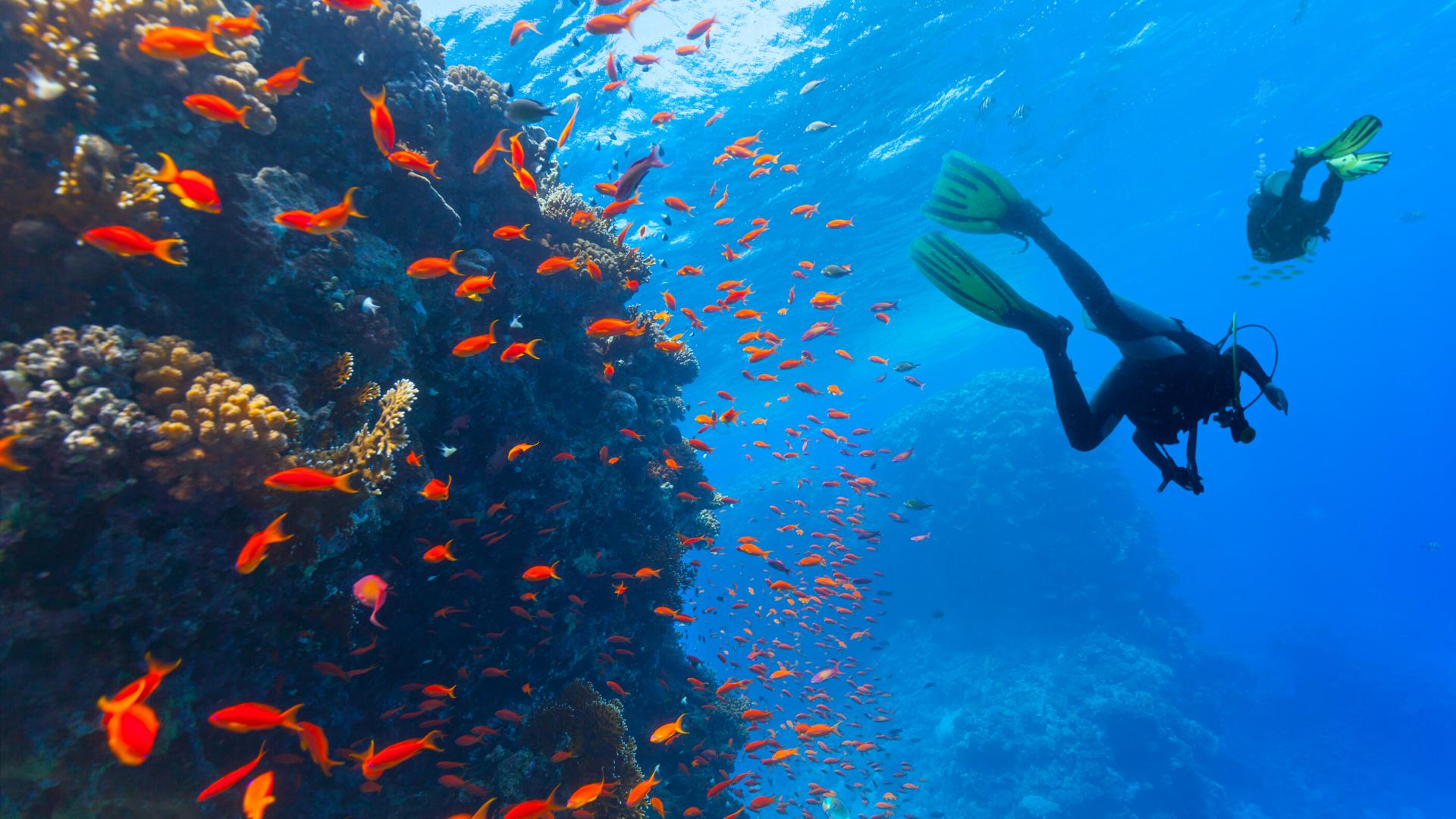 Jak se stát potápěčem? :)