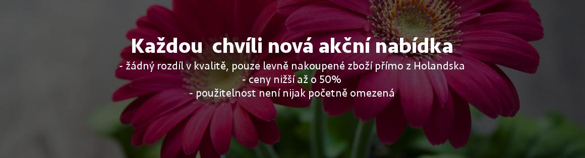 Akční ceny květin