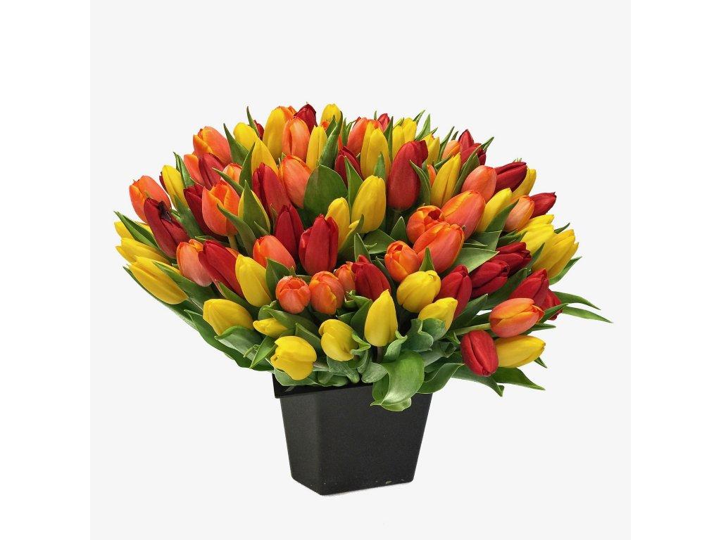 Kytice 101 tulipánů