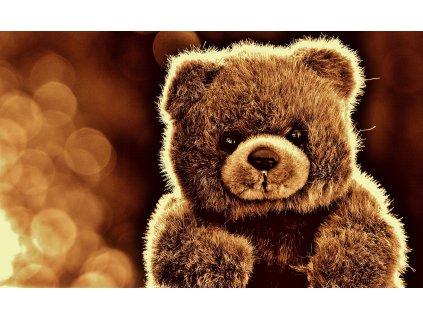 bear 1819845 1920