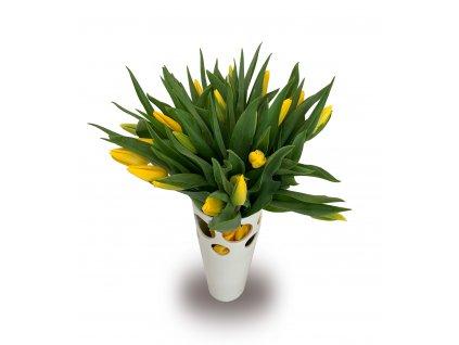tulip bcg
