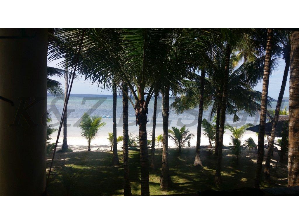 1788 palmy nad plazi