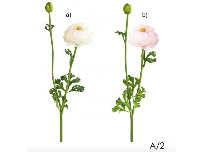 Pryskyřník - Ranunculus H56 světlý