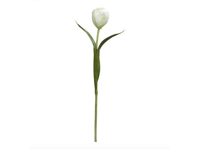 Tulipán H38 - bílý poslední kus