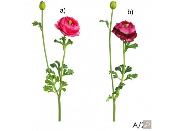 Pryskyřník - Ranunculus H56 tmavý