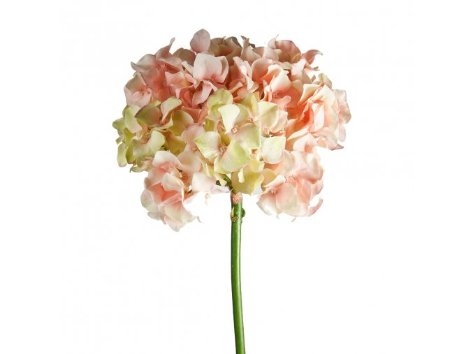 Hortenzie H48 -růžová
