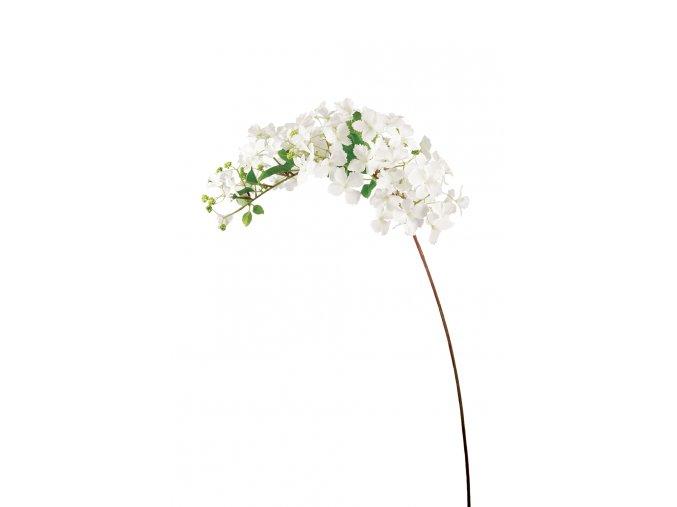 Hortenzie větvička - bílá