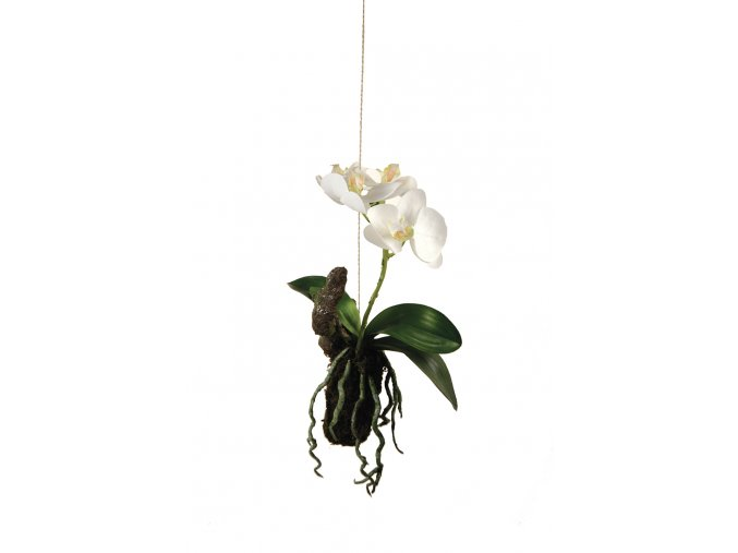 Závěsná orchidej
