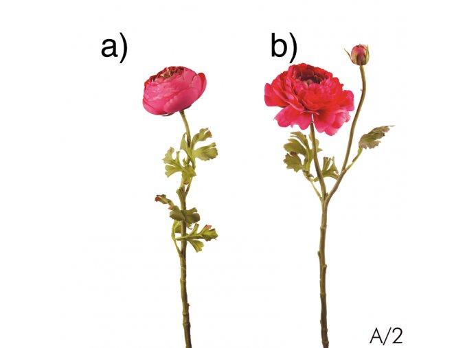 Ranunculus - růžový (pryskyřník) POSLEDNÍ KUSY!!