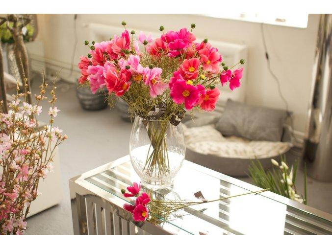 COSMOS SPRAY - krásenka -růžové odstíny