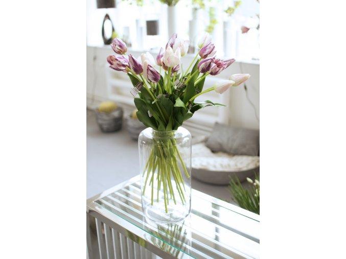 Tulipán fialová barva