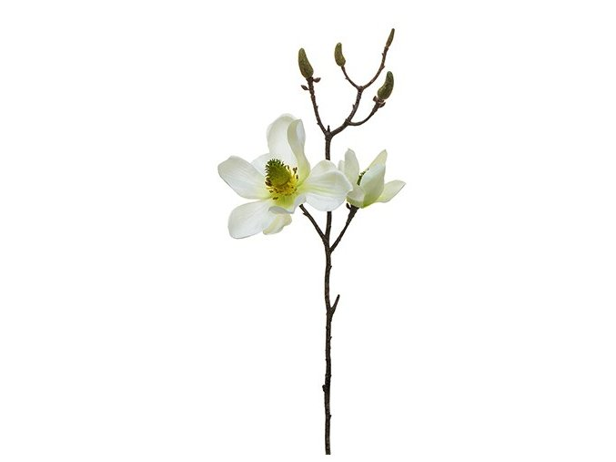 Magnolie h42 krémová