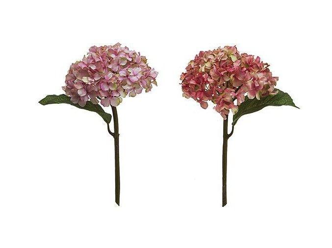 Hortenzie růžová/zeleno růžová H35