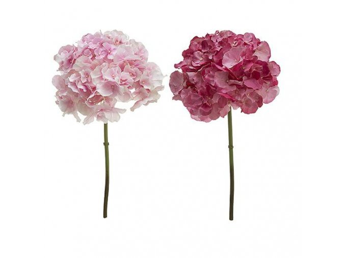 Hydrangea růžová