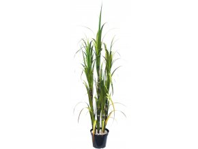 21539 zuckerrohr kunstpflanze