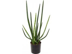 21673 sansevieria cylindrica kunstpflanze 01