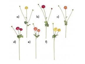 Pryskyřník - Ranunculus H72