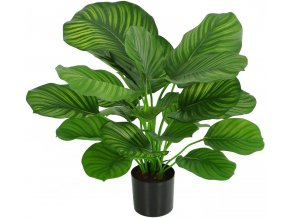 21679 calathea fasciata kunstpflanze