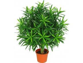 21705 podocarpuskugel deluxe kunstpflanze