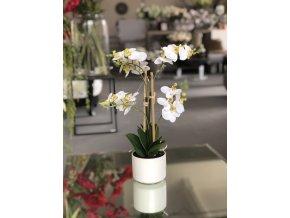Bílá Orchidej ve váze EDG H40