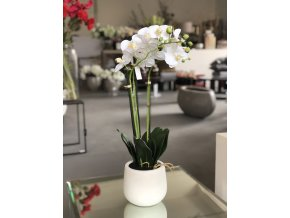 Bílá orchidej ve váze EDG H63