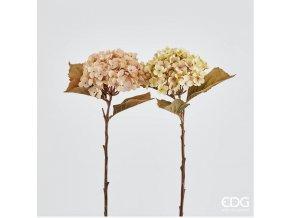 Hortenzie EDG H52 růžová, zelená - světlá