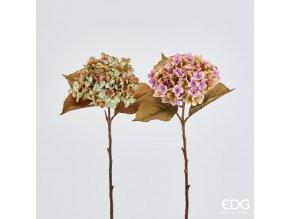 Hortenzie EDG H52 zelená, růžová - tmavá