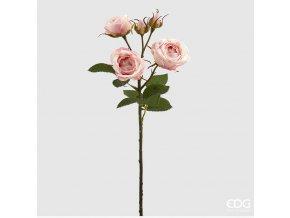Růže EDG H46 růžová