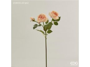 růže EDG H65 broskvová poslední ks
