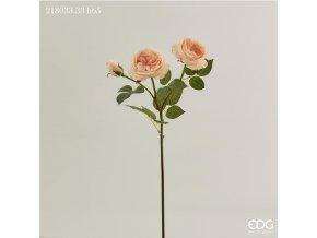 růže EDG H65 broskvová