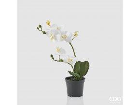 Bílá orchidej v květináči EDG H33