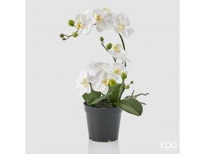 Bílá orchidej v květináči EDG H43
