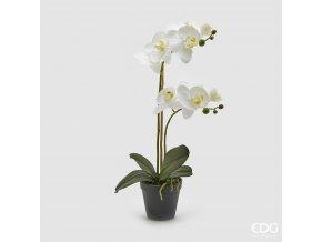 Bílá orchidej v květináči EDG 48cm