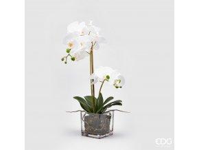 Bílá orchidej ve skleněné váze EDG 59cm