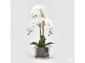 Bílá orchidej ve skleněné váze EDG 69cm