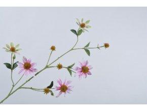 Růžová Rudbeckia - třapatka
